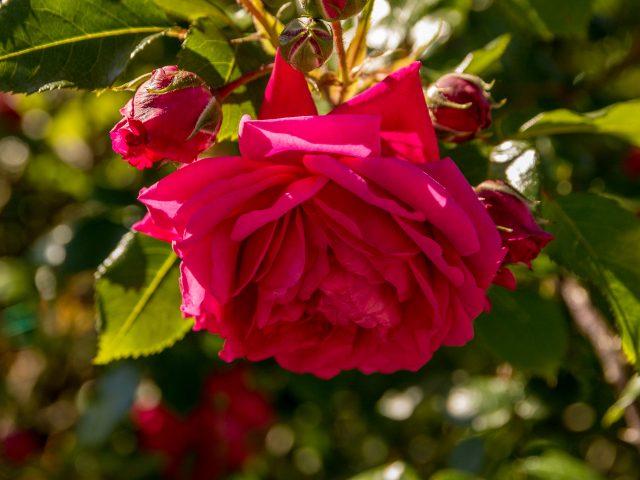 2019.05.22 - Gradina Botanica - 053