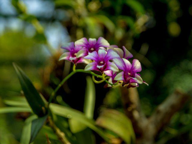 2019.05.29 - Gradina Botanica - 100