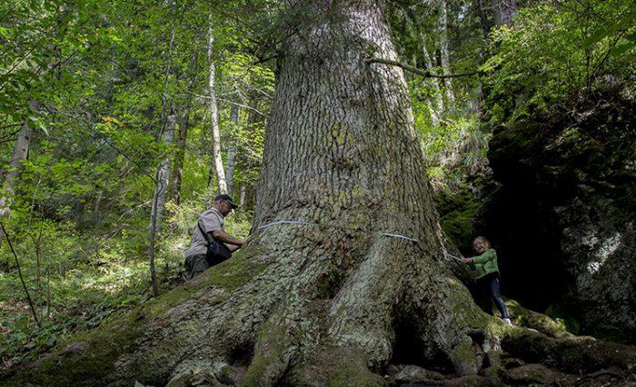 arborele anului 2020 unibuc