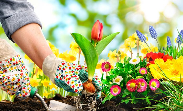 curatenia de primavara 2020 gradina botanica ub